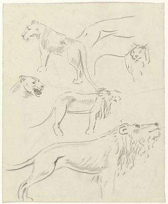 Animals Paintings - Studies of lions, Carel Adolph Lion Cachet, 1874 - 1945 by Carel Adolph Lion Cachet