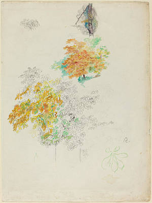 Classic Study Drawing - Studies Of Trees by Auguste Renoir