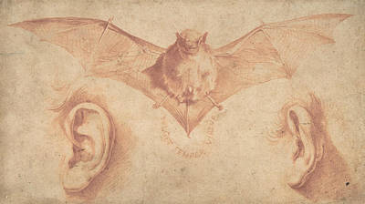 Drawing - Studies Of Two Ears And Of A Bat by Treasury Classics Art