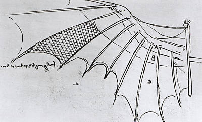 Pen And Ink Drawing Drawing - Studies Of Wing Articulation by Leonardo Da Vinci