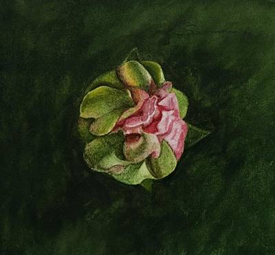 Cactus Flower Watercolor Painting - Study For Cactus Bloom by C Wilton Simmons Jr