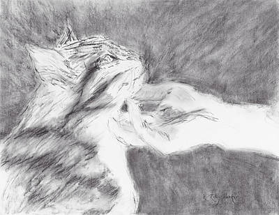 Gray Tabby Drawing - Study For Sweet Spot by Kathryn Riley Parker