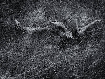 Photograph - Study In Gray by Lynne Mitchell