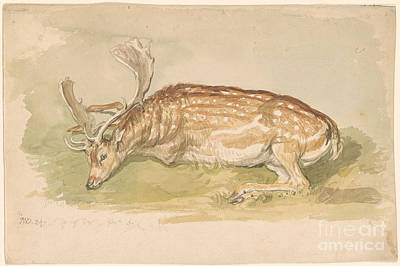 Nature Study Painting - Study Of A Deer by MotionAge Designs
