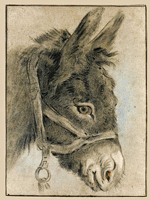 Drawing - Study Of A Donkey's Head by Attributed to Jean-Baptiste Huet