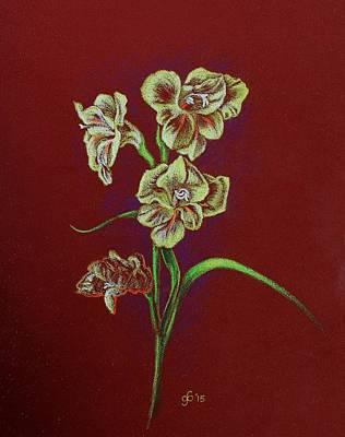 Gladiolas Drawing - Study Of A Gladiola by Glenn Boyles