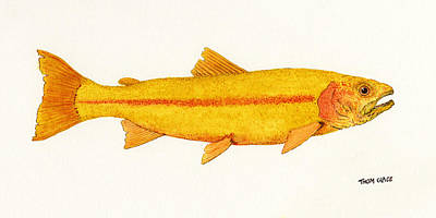 Trout Painting - Study Of A Golden Rainbow Trout by Thom Glace