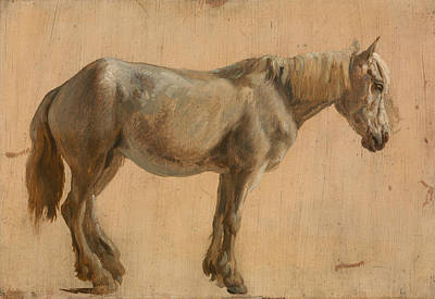 Painting - Study Of A Grey Horse by Jacques-Laurent Agasse