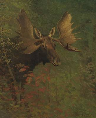 Nature Study Painting - Study  Of  A  Moose by Celestial Images