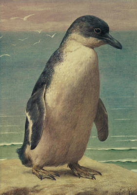 Penguin Painting - Study Of A Penguin by Henry Stacey Marks