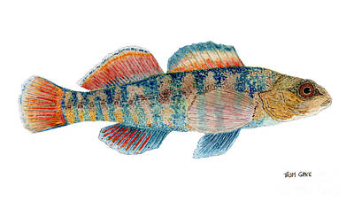Print featuring the painting Study Of A Rainbow Darter by Thom Glace
