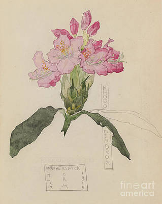 Drawing - Study Of A Rhododendron, 1915 by Charles Rennie Mackintosh