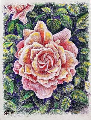 Roses Drawings - Study of a Rose  by Glenn Boyles