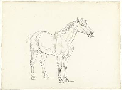 Study Of A Standing Horse Art Print by MotionAge Designs