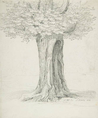Drawing - Study Of A Tree by Ernst Ferdinand Oehme