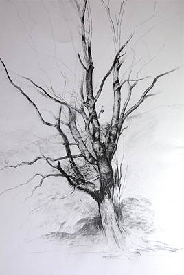 Study Of A Tree Art Print by Harry Robertson