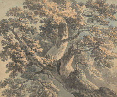Painting - Study Of A Tree by Paul Sandby