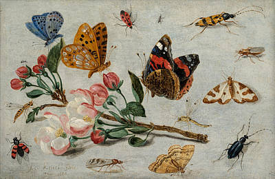Grasshopper Painting - Study Of Butterflies And Other Insects With A Sprig Of Apple Blossom by Jan van Kessel The Elder