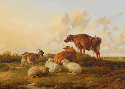 Animals Painting - Study Of Cows by Thomas Sidney