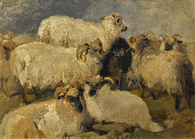 Painting - Study Of Highland Blackface Sheep by Edwin Landseer