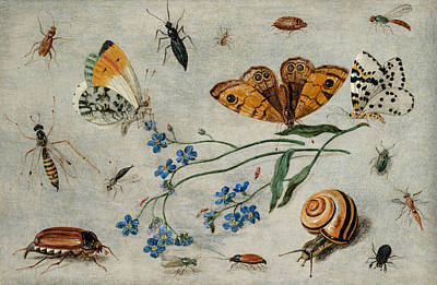 Grasshopper Painting - Study Of Insects, Butterflies And A Snail With A Sprig Of Forget-me-nots by Jan van Kessel The Elder