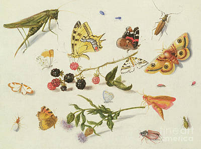 Grasshopper Painting - Study Of Insects, Flowers And Fruits, 17th Century by Ferdinand van Kessel