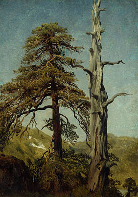 Norwegian Painting - Study Of Trees by August Cappelen