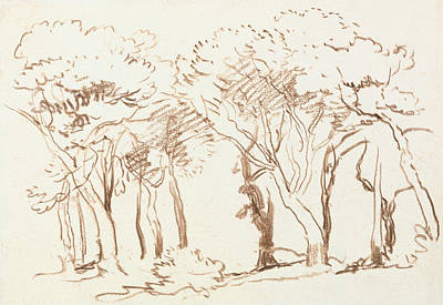 Drawing - Study Of Trees by David Cox