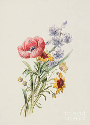 Colored Pencil Painting - Study Of Wild Flowers by English School