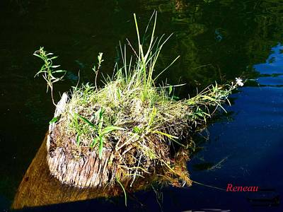 Photograph - Stump Art 11 by Sadie Reneau
