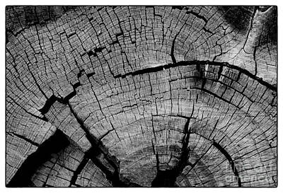 Photograph - Stump II by David Waldrop
