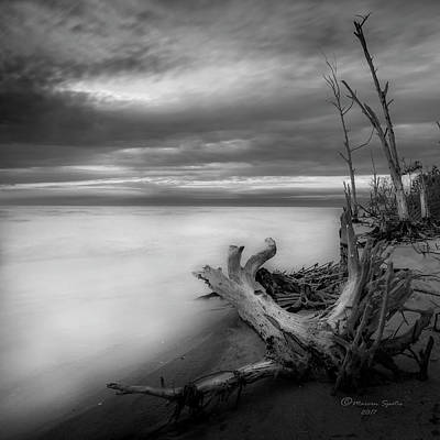 Driftwood Photograph - Stump Island -bw by Marvin Spates