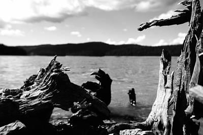 Stump Lake Art Print by Tom Melo