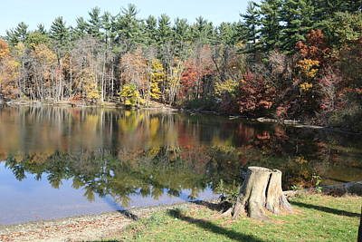 Photograph - Autumn At Lake Williams by Donald C Morgan