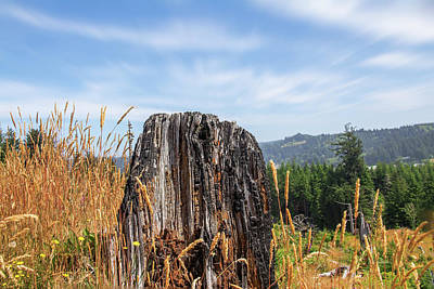 Photograph - Stump On Top by Bill Posner