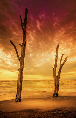 Driftwood Photograph - Stump Pass by Marvin Spates