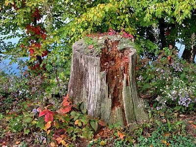 Wall Art - Photograph - Stump by Robert Papps