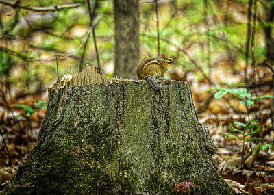 Photograph - Stumped Chipmunk At Mission Point Light House Michighan by LeeAnn McLaneGoetz McLaneGoetzStudioLLCcom