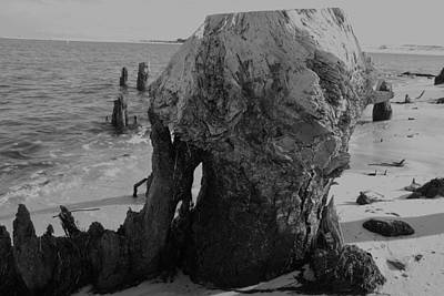 Photograph - Stumped by Renee Holder