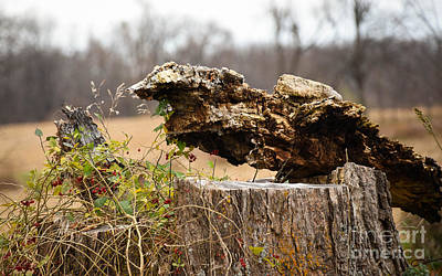 Photograph - Stumped Weeds by Grace Grogan