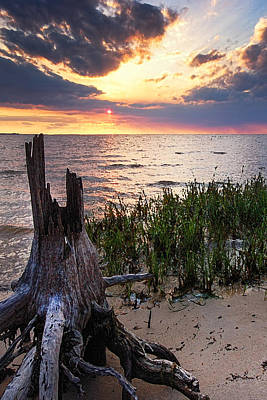 Photograph - Stumps And Oyster Bay Vertical by Michael Thomas