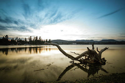 Photograph - Stumps At The Beach by DLP Squared Photography