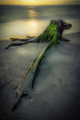 Driftwood Beach Photograph - Stumps Edge by Marvin Spates