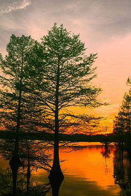 Photograph - Stumpy Lake Natural Area by Pete Federico