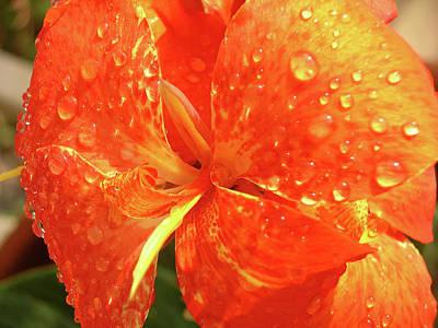 Photograph - Stunning Canna Lily by Karen Nicholson