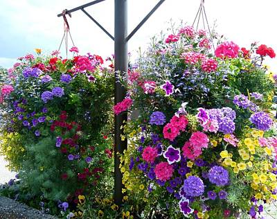 Hanging Baskets Photograph - Stunning Floral Baskets by Will Borden