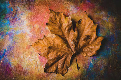 Photograph - Stunning Old Leaf by Garry Gay