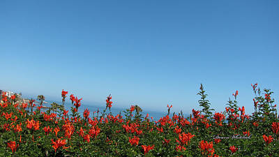Photograph - Stunning Red Blossoms By The Sea by Doreen Whitelock