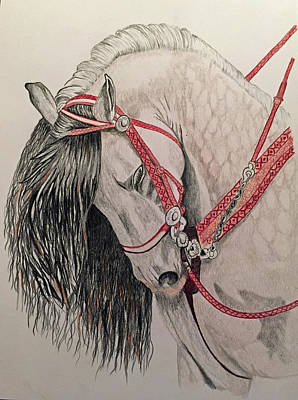 Brenda Brown Art Drawing - Stunning Spanish Horse by Brenda Brown