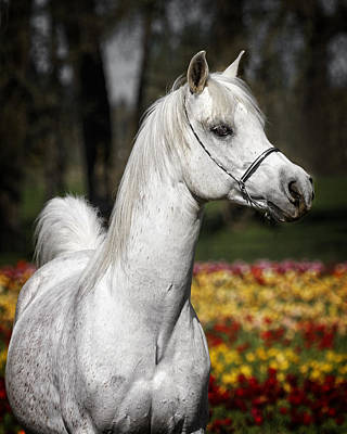 Photograph - Stunning Stallion by Wes and Dotty Weber